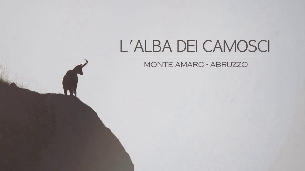 Camosci in Abruzzo