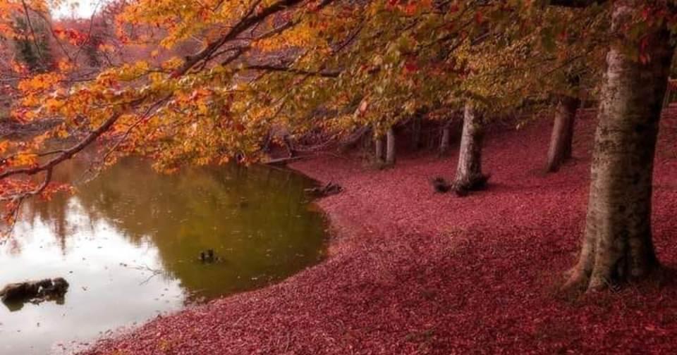 È tempo di Foliage. Ecco 5 gite che ti consigliamo di fare durante questo periodo