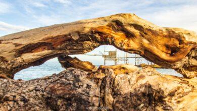 Sulla spiaggia, l'occhio del tronco che guarda al Trabocco di Punta Aderci