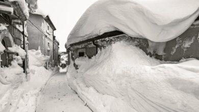 rovere sotto la neve