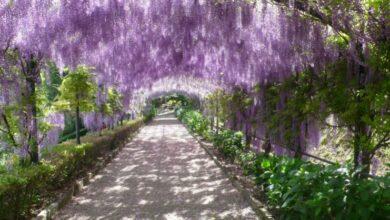 Come fare per visitare il Giardino Bardini a Firenze? Orari, costi e come arrivare