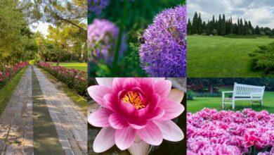 Hai già visitato il Parco Giardino Sigurtà? Orari, prezzi e come raggiungerlo / Video