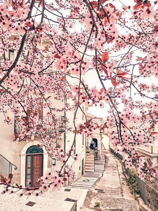 Pretoro. I colori di primavera arrivano nel Borgo del Lupo (guarda la foto originale) orig