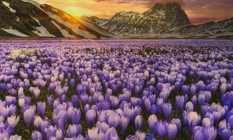 Tramonto di primavera tra i Fiori e le Montagne di Campo Imperatore (guarda la foto originale)