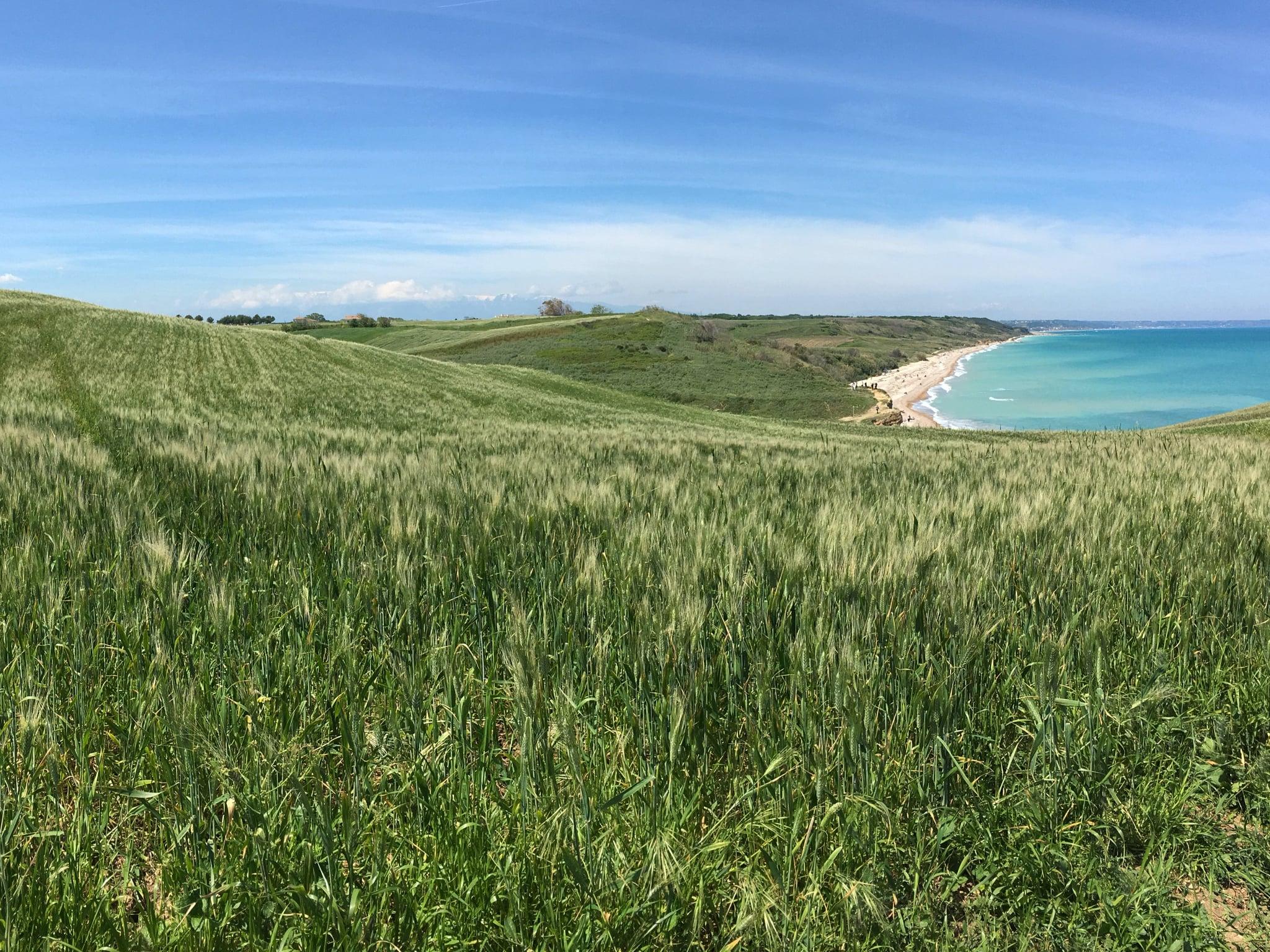 Punta Aderci. Quando il verde del grano si bacia col blu del mare e del cielo