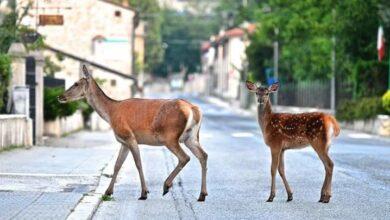 Come far vedere ai bambini i Cervi e i Daini a Villetta Barrea?