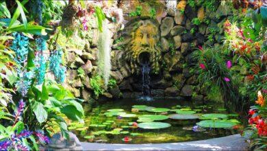Come fare per visitare i Giardini La Mortella? Info, costi e come arrivare