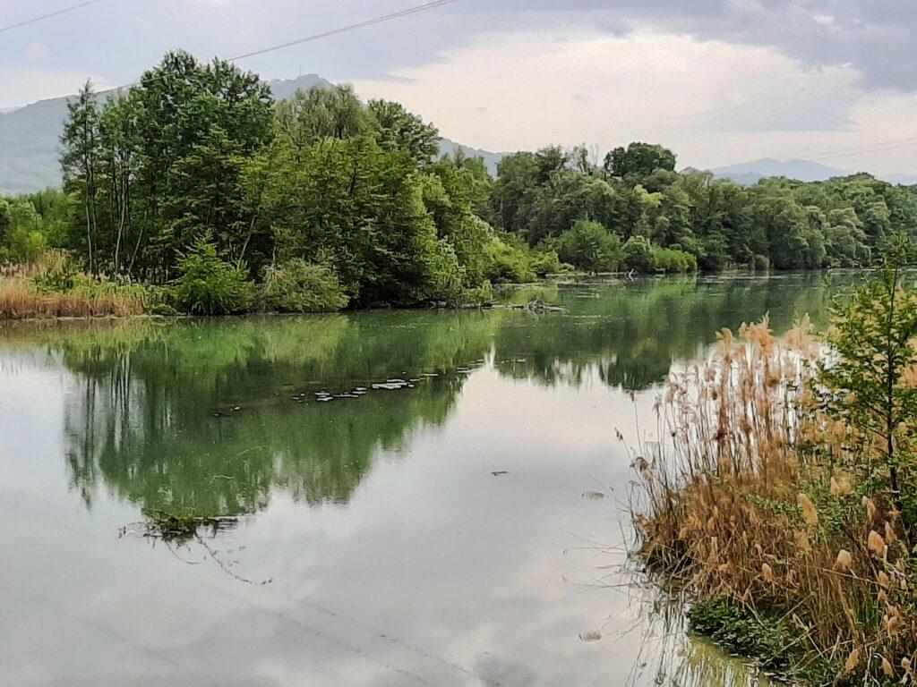 Hai già visitato l'Oasi WWF di Serranella con Tartarughe, Aironi, Cicogne e Fenicotteri?