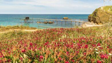 Punta Aderci. Profumo d'Estate e tappeto di Fiori colorati: è bellezza! / Video