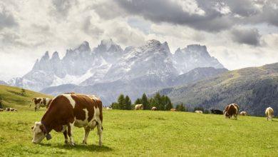 Trentino-Alto Adige. L'incredibile scenario delle Pale di San Martino viste da Fuciade
