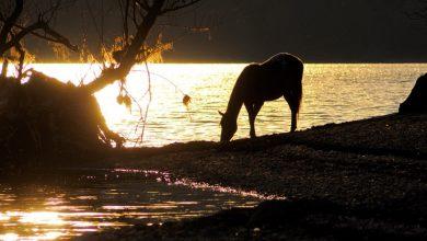 Abruzzo. Cavalli e sorsi di luce sul Lago di Barrea, un quadro magico e surreale