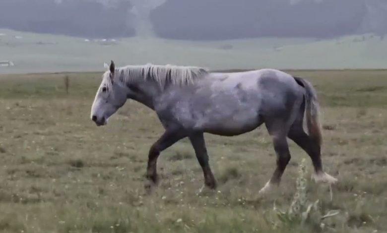 Abruzzo. Cavalli al galoppo nella Natura selvaggia di Campo Imperatore