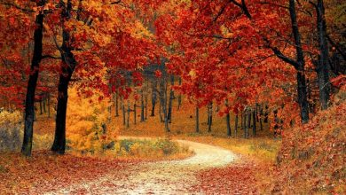 Dove ammirare il Foliage d'Autunno in Lazio? Ecco 21 luoghi che ti consigliamo di visitare