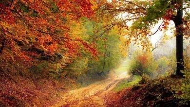 Foliage d'Autunno nelle Marche. Ecco 23 luoghi per ammirarlo e restare a bocca aperta